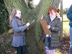Pupils record information on their trees